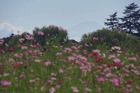 近くにありそうな富士山
