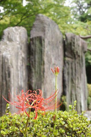 屏風岩と彼岸花