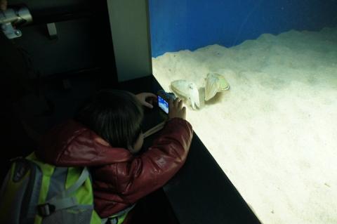 イカを撮影する悠真