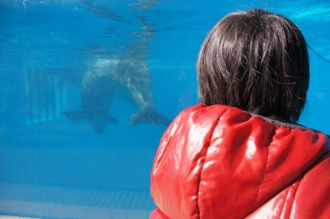 イルカを見つめる悠真