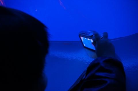 アカクラゲを見上げて