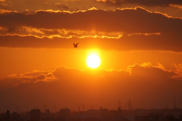富士山にかかる夕日を眺めるカモメ