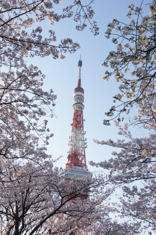 桜に包まれた東京タワー2
