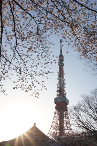 夕日と桜と東京タワーと