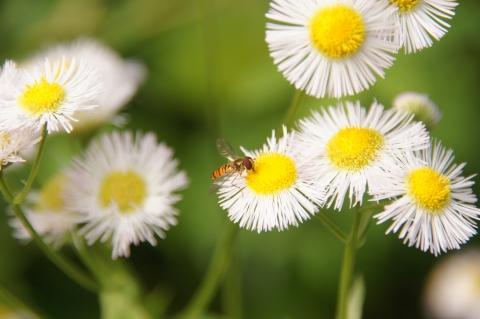春女苑に集まる虫