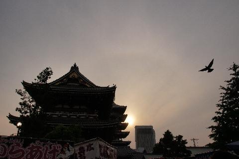 浅草寺で暈