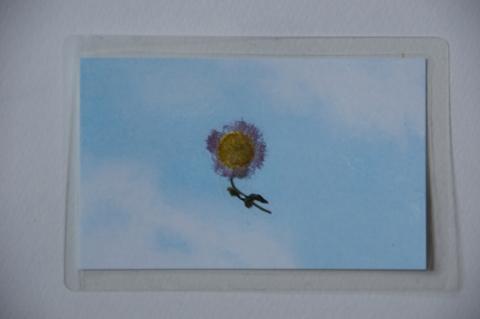 押し花にしたハルジオン
