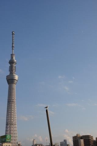 東京スカイツリーと月 その2