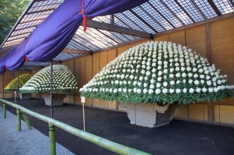 大作り花壇
