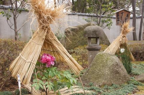 上野東照宮のぼたん苑