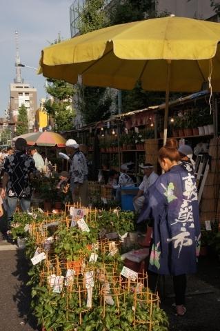 朝顔市と東京スカイツリー