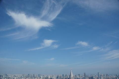 スズメの親子が飛んでいるような雲