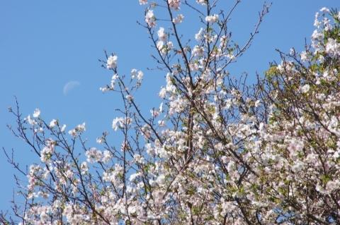 お月見とお花見