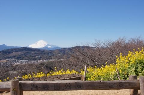 吾妻山公園から富士山