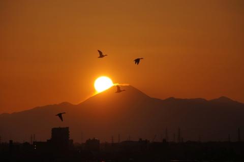 富士山とカモの群れ
