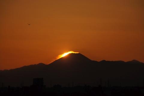 富士山とカラス?