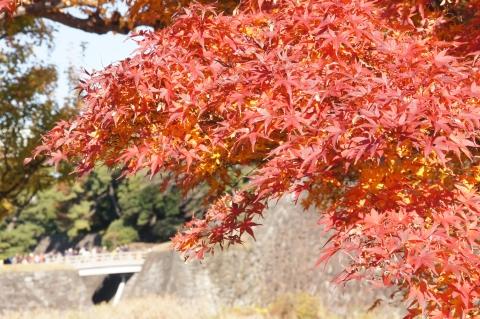 西桔橋と紅葉