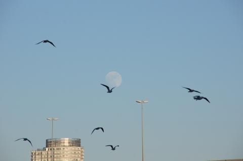 月を背負うカモメ.JPG