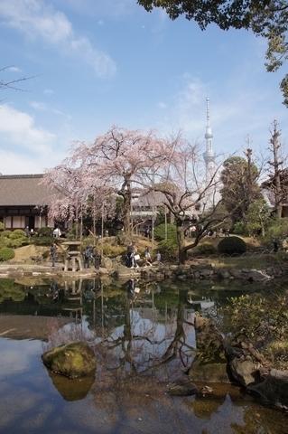 伝法院庭園と東京スカイツリー