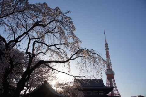 増上寺・東京タワー・桜