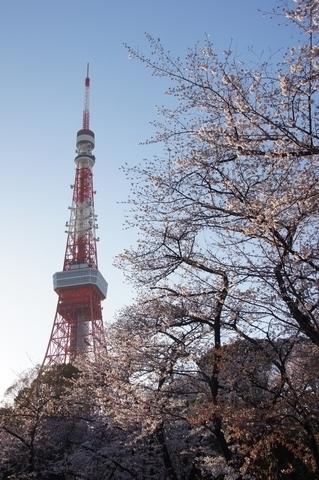 東京タワーと桜2