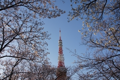 アクラに包まれた東京タワー
