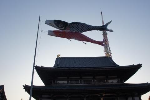 増上寺の鯉のぼりと東京タワー.JPG