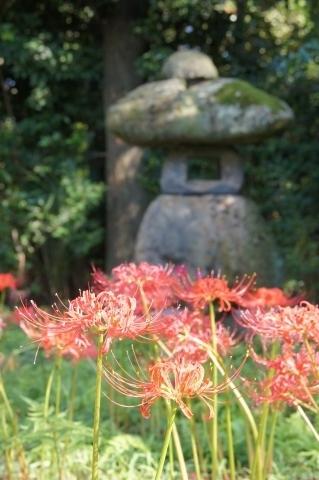 石灯籠とヒガンバナ