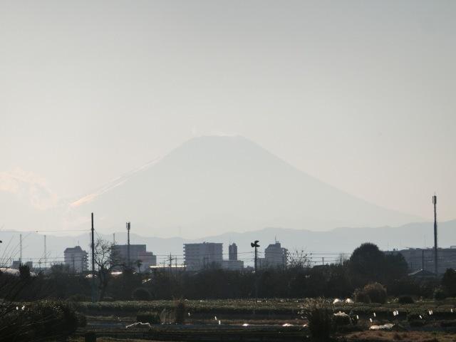 路上富士1