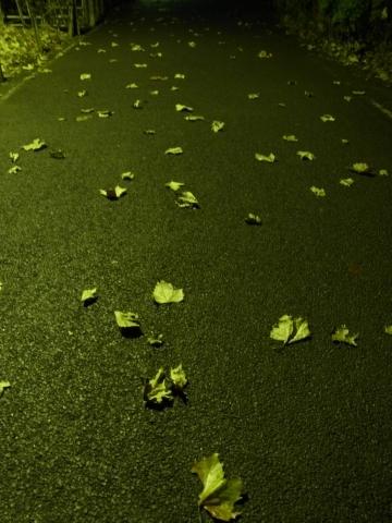 足あとのようなプラタナスの落ち葉