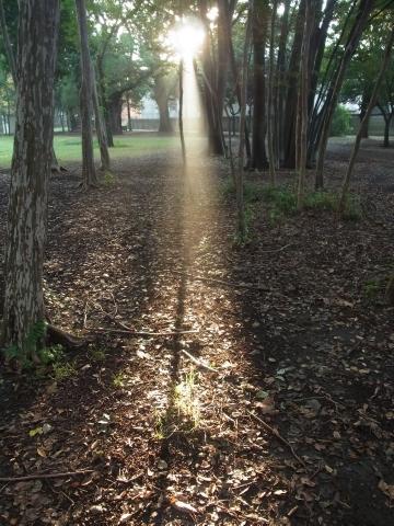 木漏れ日のスポットライト