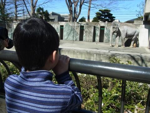 ゾウのはな子と悠真