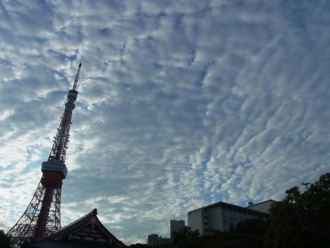 うろこ雲と東京タワー