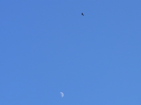 月とトビ2
