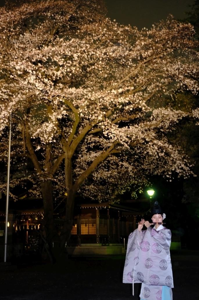 桜と宮司さん