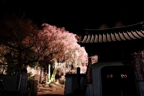 新光寺のライトアップ