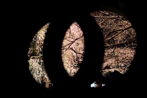 新光寺のライトアップ2