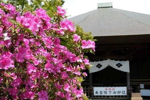 ツツジと毘沙門堂2