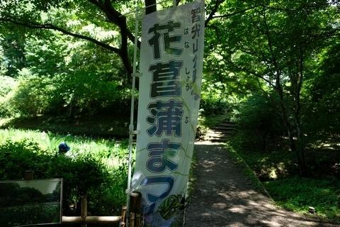 智光山公園花菖蒲まつり