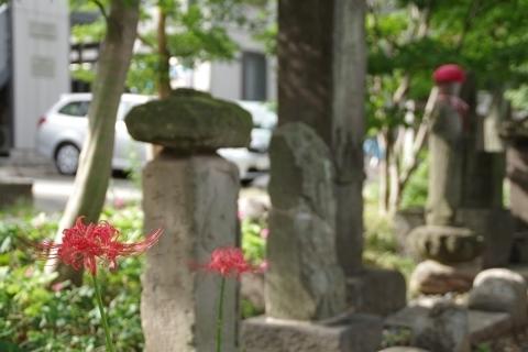 石仏群とヒガンバナ2