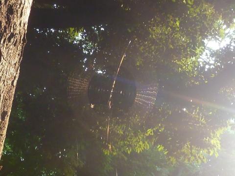 クモの巣を貫く虹の矢