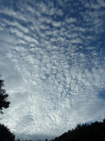 空に広がるうろこ雲