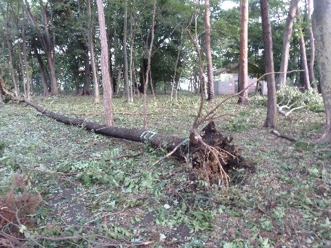 倒れた木2