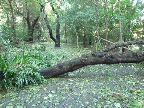 倒れた木4