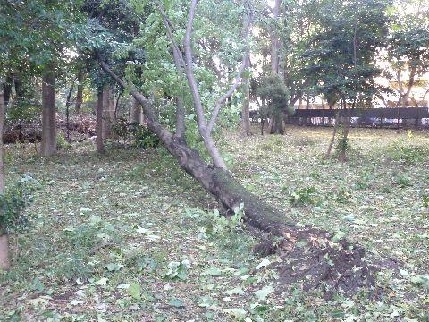 折れた木3