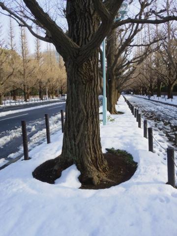 ぽっかり雪の穴が開いたイチョウの根本