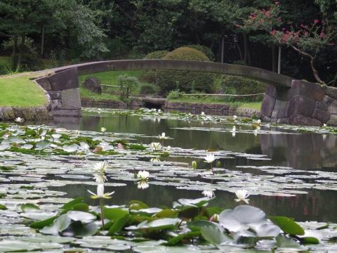 美しき日本庭園