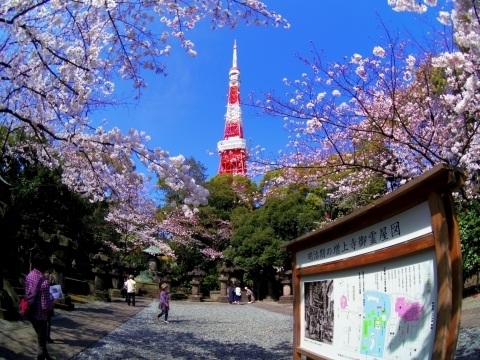 Fisheyeで墓所と東京タワー1