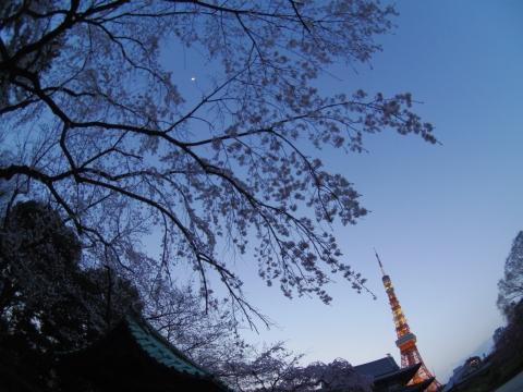 水盤舎前の枝垂れ桜と月と東京タワー