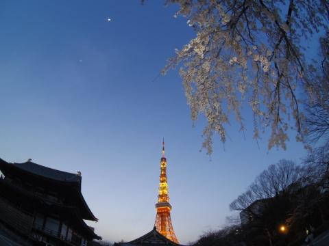 安国殿前の桜と東京タワーと月